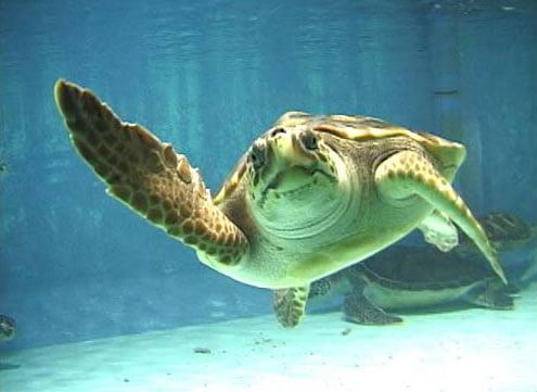 Ecco in calabria la carta per salvaguardare le for Tutto per le tartarughe