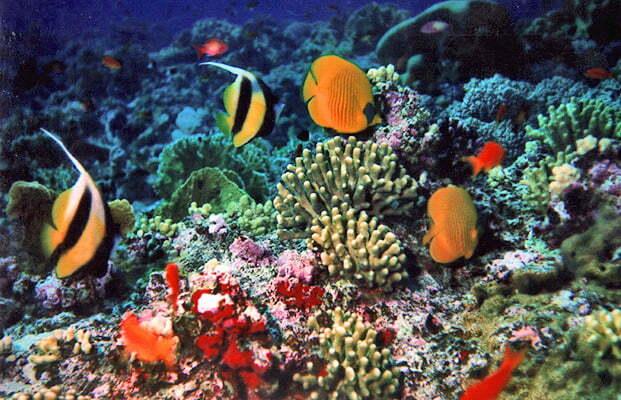 Ambiente necessari 643 mln dollari per proteggere la for Temperatura acquario