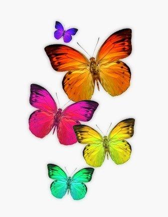 Scoperto il segreto che fa mimetizzare le farfalle meteo web for Immagini farfalle da ritagliare