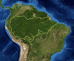 Foresta dell'Amazzonia
