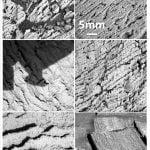 Figura 16. Immagini di dettaglio delle lamine, in cui si apprezza la fitta e regolare laminazione sub-millimetrica degli affioramenti di Meridiani Planum.
