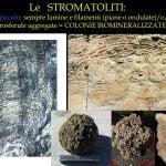 Figura 46-54- Paralleli tra stromatoliti terrestri e sedimenti marziani a livello microscopico