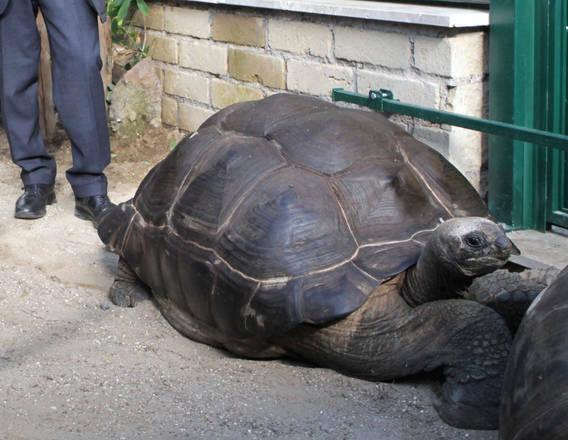al bioparco di roma le tartarughe pi grandi del mondo le