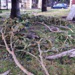 Danni per il vento a Reggio Calabria