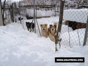 animali neve gelo