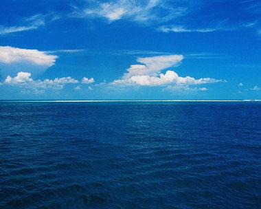 Perch l 39 oceano blu la risposta sorprendente del noaa - Foto di animali dell oceano ...