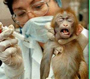 vivisezione scimmie