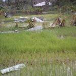 Il ciclone ERINA si abette sulla scuola di Arti e Mestieri di Qulimane_clip_image030