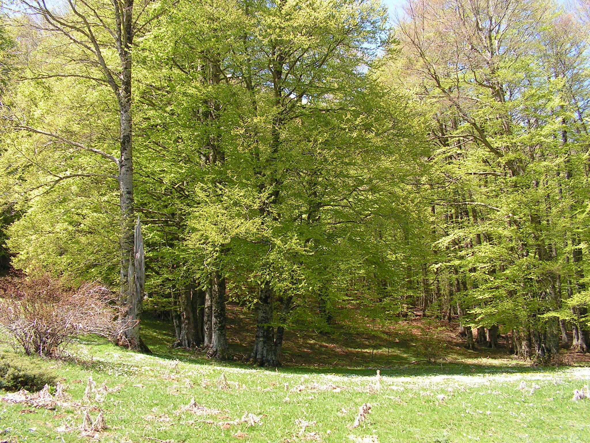 Riconoscere gli alberi e gli arbusti meteo web for Alberi simili alle querce
