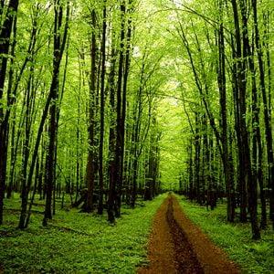 co2_alberi