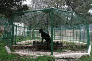 Ambiente: animali spesso tristi in zoo europei con pochi spazi, ricerca