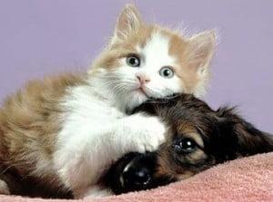 Animali, Legambiente: al via la campagna contro i maltrattamenti