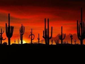 Fantastico tramonto fra i Captus del deserto messicano, non lontano dai confini con l'Arizona