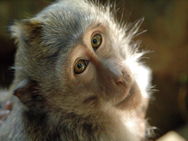 Animali scoperti nei macachi i neuroni dell 39 autoconsapevolezza meteo web - Specchio che si rompe da solo ...