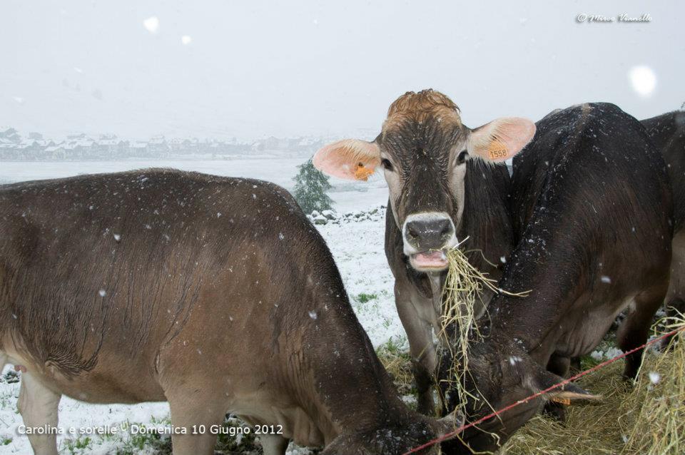 Foto Ponti Incantevoli Favole : Le incantevoli foto di livigno sotto la nevicata
