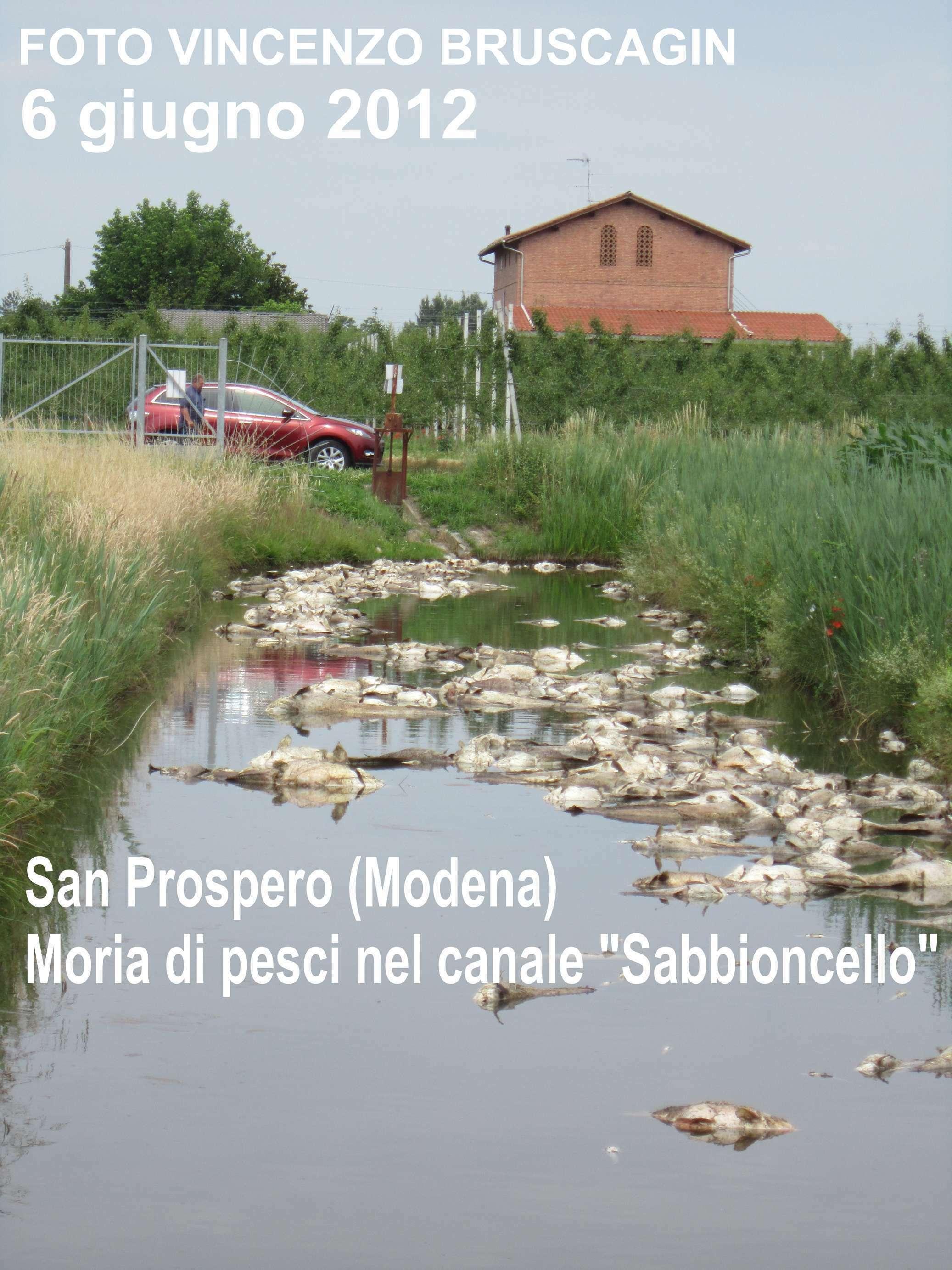 Morìa Di Pesci Nelle Zone Terremotate Dell'Emilia Romagna: Le Foto #4C6036 2074 2765 Foto Di Mobili Per Cucina