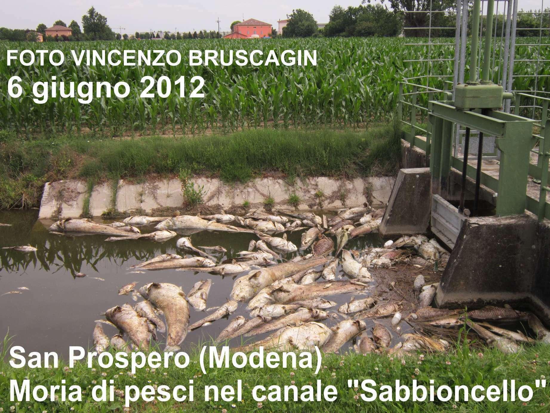 Morìa Di Pesci Nelle Zone Terremotate Dell'Emilia Romagna: Le Foto #4B5F2B 1843 1382 Foto Di Mobili Per Cucina
