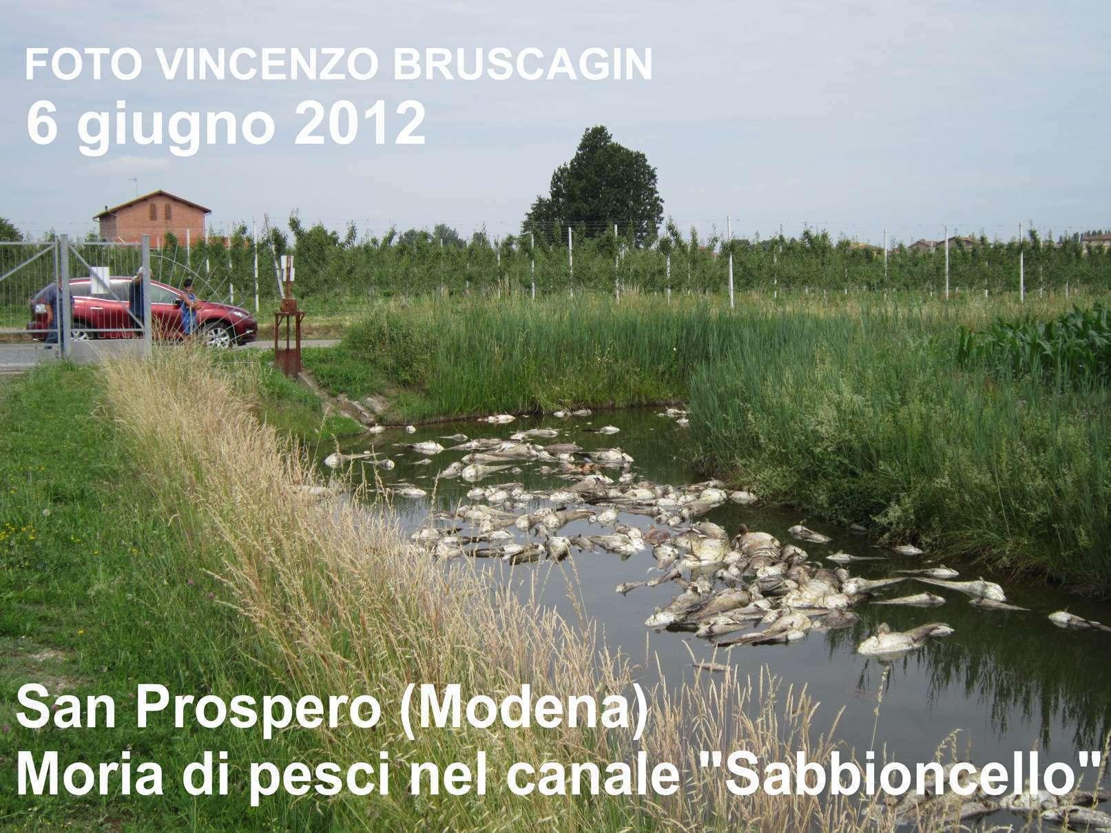 Morìa Di Pesci Nelle Zone Terremotate Dell'Emilia Romagna: Le Foto #496030 1613 1210 Foto Di Mobili Per Cucina