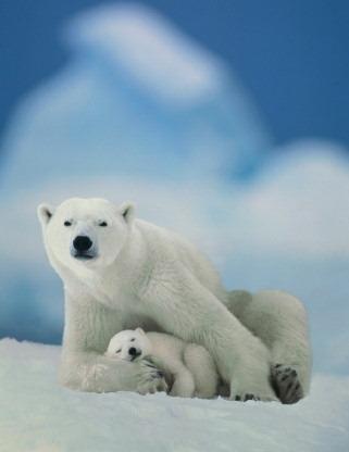 Animali: le ricerche sulle specie a rischio aumentano il pericolo di estinzione