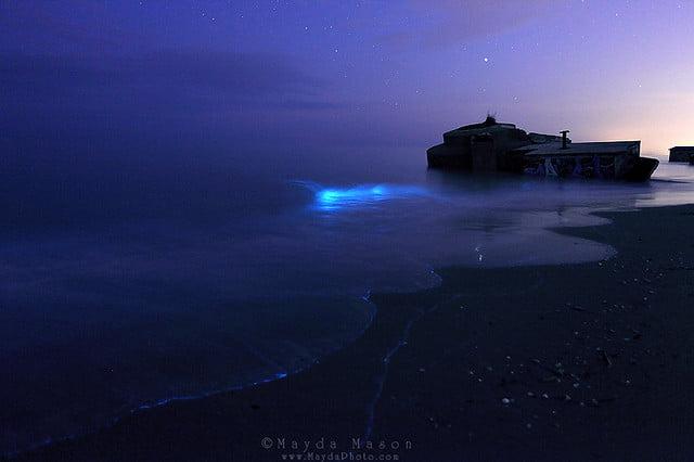 Quando il mare si illumina nel cuore della notte il - Foto di animali dell oceano ...