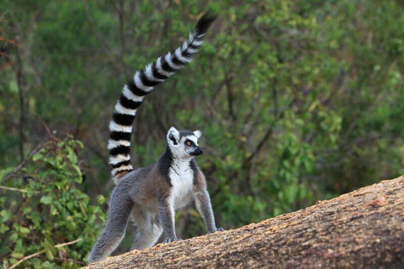 external image lemuri-madagascar.jpg