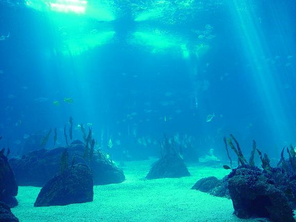 Resultado de imagen de océano pacífico animado