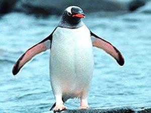 Meteo i pinguini dello zoo di londra che prevedono l - Pinguini di natale immagini ...