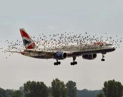 uccelli aereo
