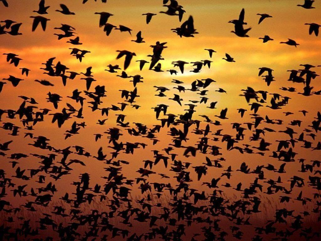 Stormo di uccelli su vercelli trailer del film