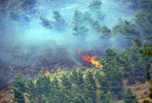 1126265 Incendio ai boschi sul monte Gradara
