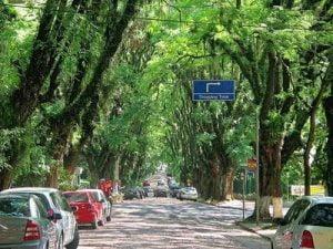 alberi città