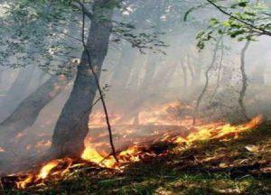 foto-incendio-riserva-dello-zi-501ed7fed1691