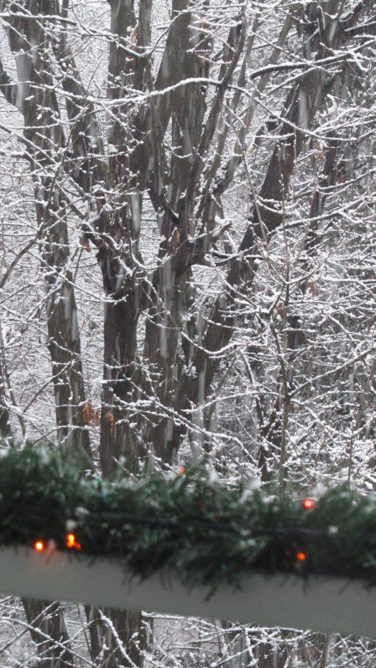 Nevica in lombardia le foto da meda in brianza meteo web for Meda provincia di