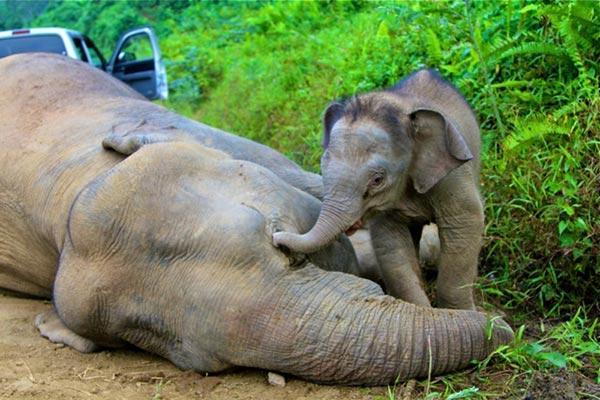 Risultati immagini per il massacro degli elefanti