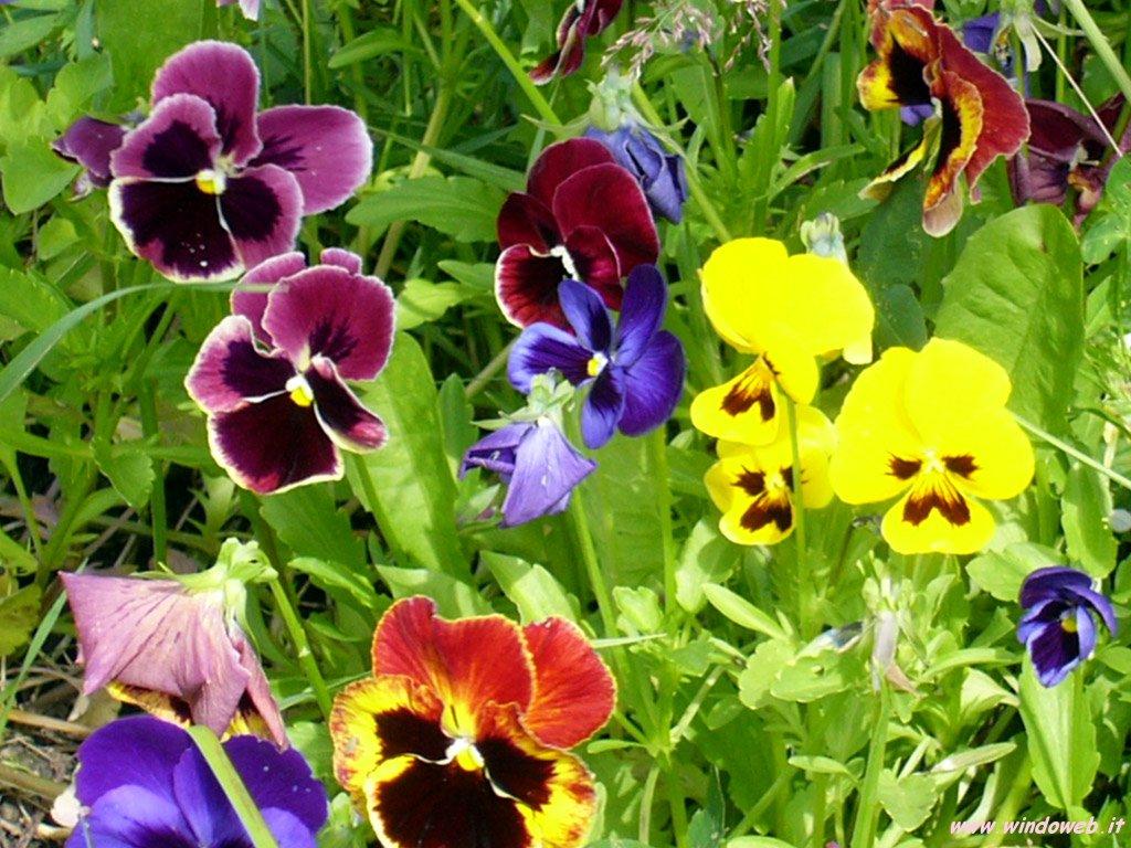 clima la coldiretti primavera in arrivo ma fioriture in