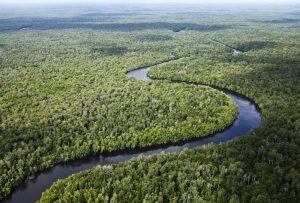 Sungai Sembilang Park in Sumatra