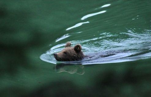 Le fantastiche immagini dell 39 orso che si fa il bagno nel lago di pr da stua meteo web - 94 si fa in bagno ...