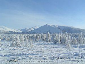 Neve sulla taiga siberiana