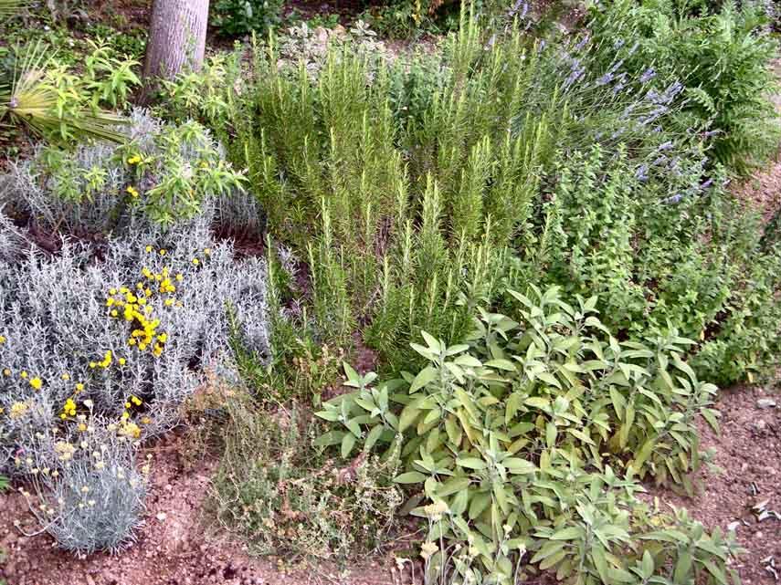 Le Piante Medicinali : Censite tutte le piante italiane nel nostro paese