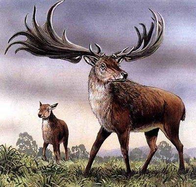 I cervi pi grandi di tutti i tempi for Corna cervo