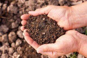 fertilita suolo