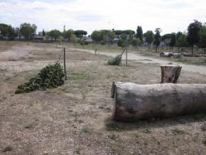 alberi tagliati_roma