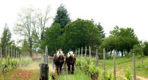 cavallo_agric