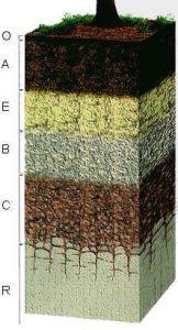 roccia-suolo-pianta