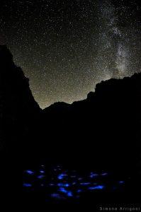 Bioluminescence - Stars