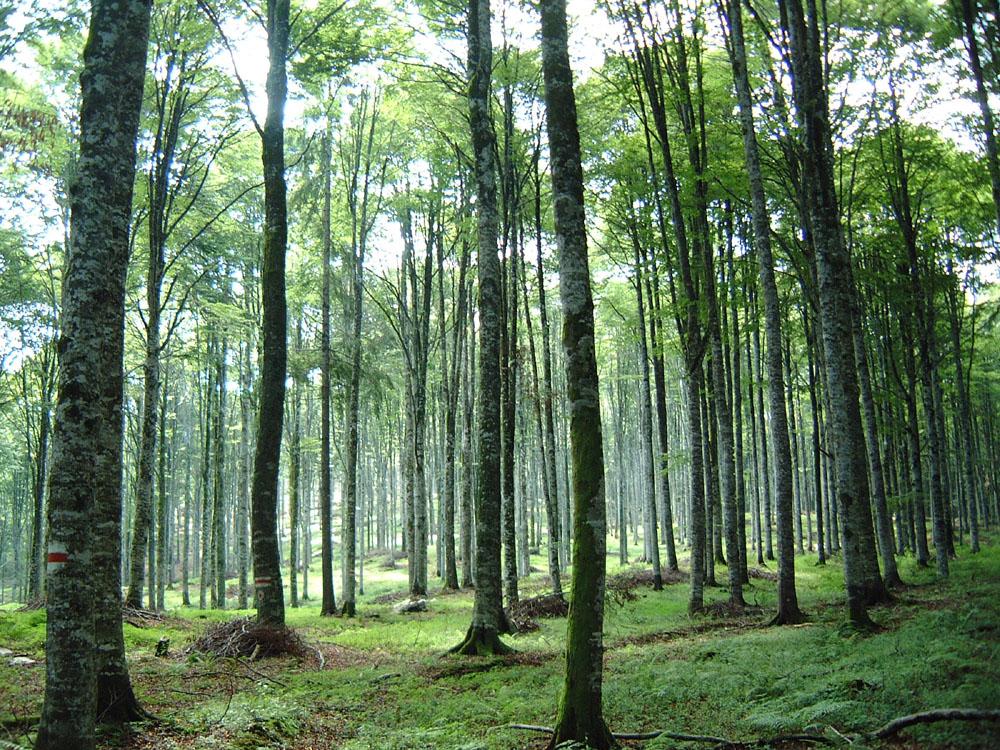 La single pole house una casa immersa nelle foreste per - Gli animali della foresta pluviale di daintree ...