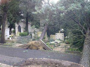 alberi-caduti-cimitero-monumentale