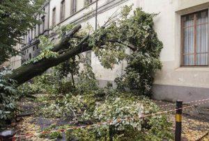 caduta alberi