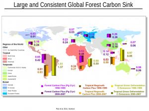 I sinks di carbonio nelle principali foreste della Terra (Pan et al., 2011, Science).