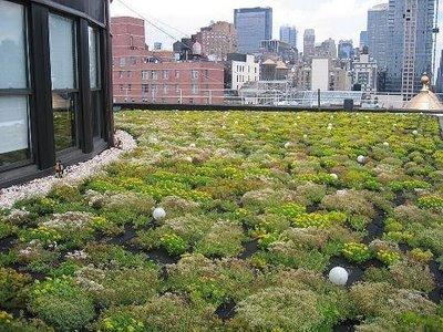 Lombardia sempre pi verde sui tetti di edifici pubblici for Giardino sempre verde